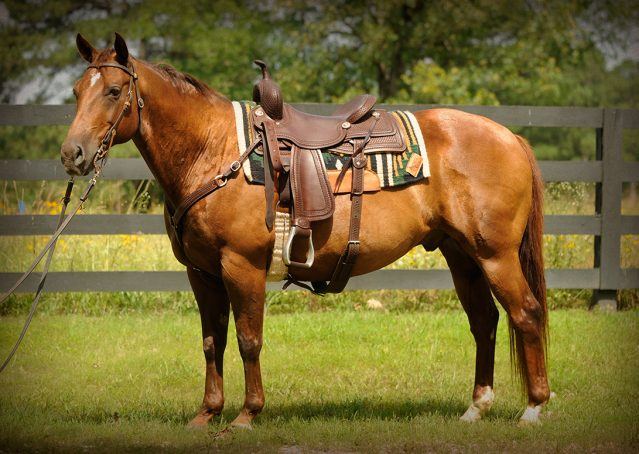 001-Clark-AQHA-horse-for-sale