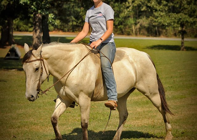 001-Dante-Buckskin-Quarter-Horse-Geldin-For-Sale