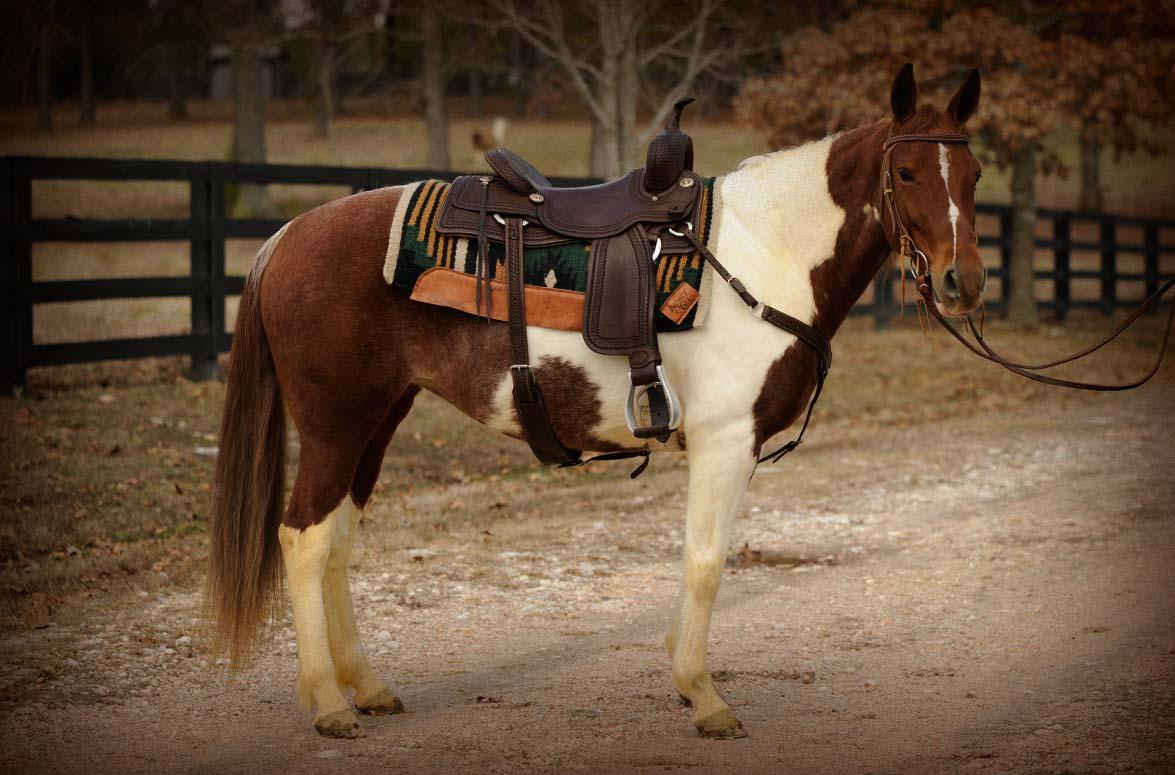 Dolls Colordvalentine Horse Of My Dreams