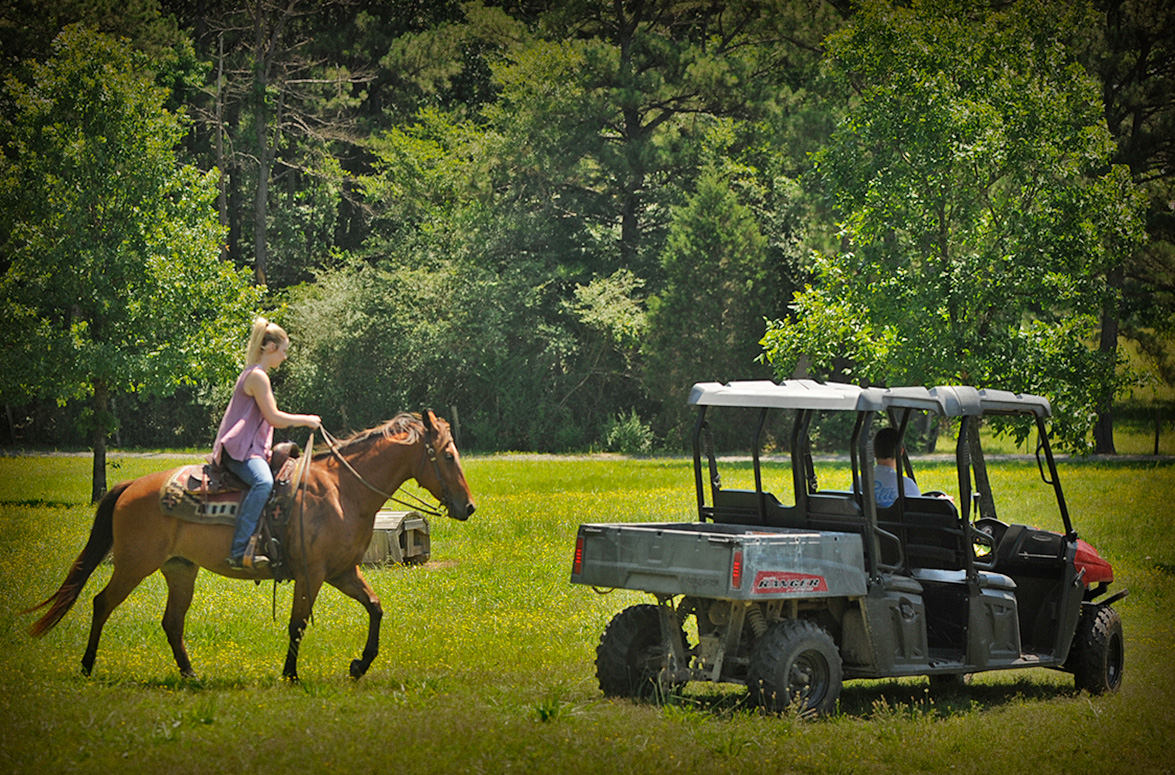 001-Dually2-Bay-AQHA-Gelding-For-Sale