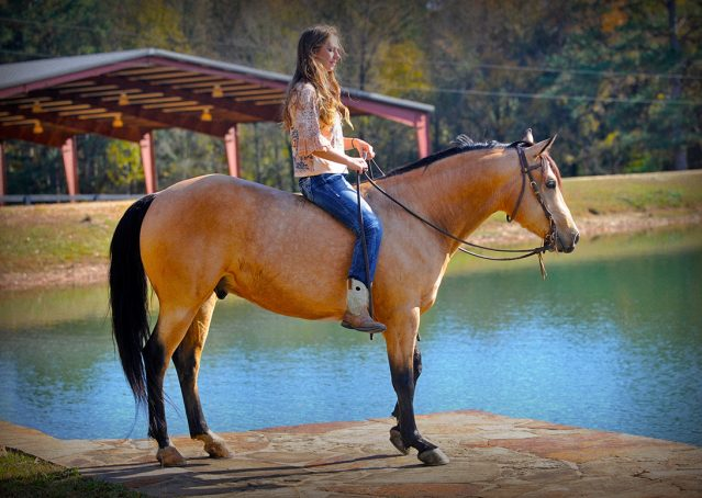001-Hotrod-AQHA-Buckskin-Gleding-For-Sale