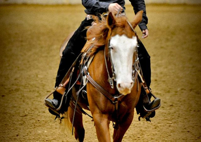 001-Indie-Sorrel-AQHA-reining-horse-for-sale
