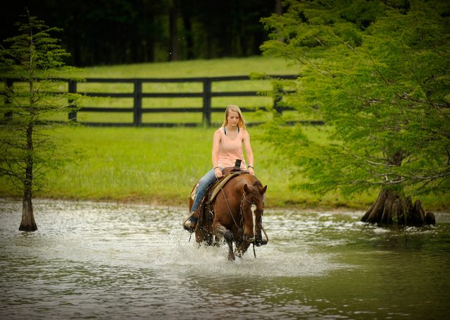 001-Jack2-Chestnut-AQHA-Gelding-For-Sale
