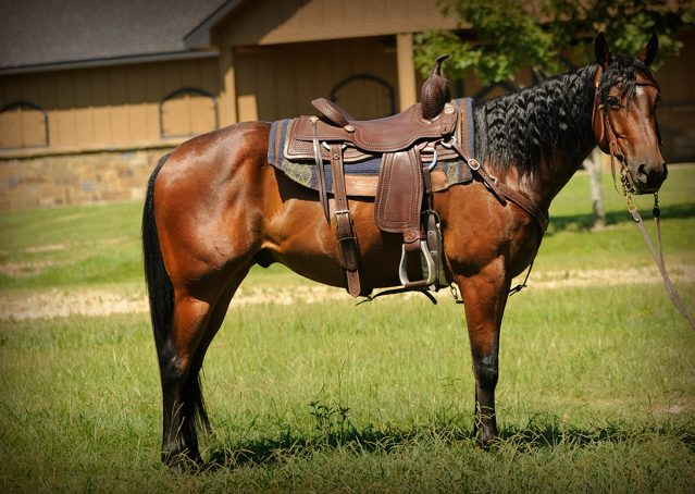 001-Nic-boomernic-aqha-gelding-for-sale