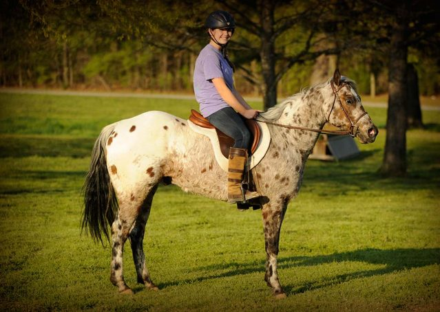 001-Shy-appaloosa-pony-for-sale