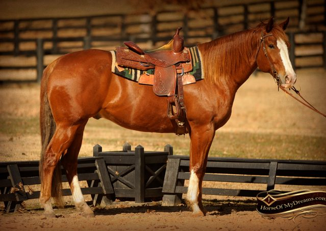 001-Zip4-AQHA-Sorrel-Gelding-For-Sale