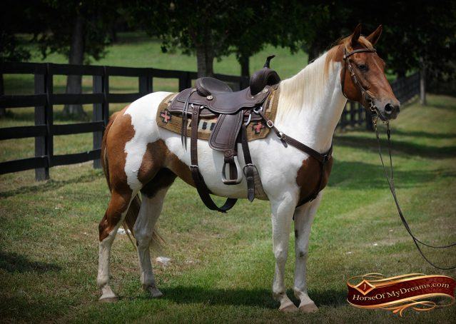 002-Amiga-APHA-Mare-For-Sale