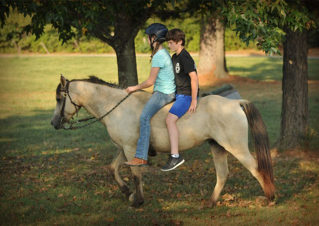 002-Buckskin-Pony-Mare-For-Sale-Jill