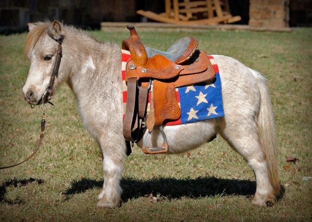 002-Drew-Paint-Mini-Pony-For-Sale