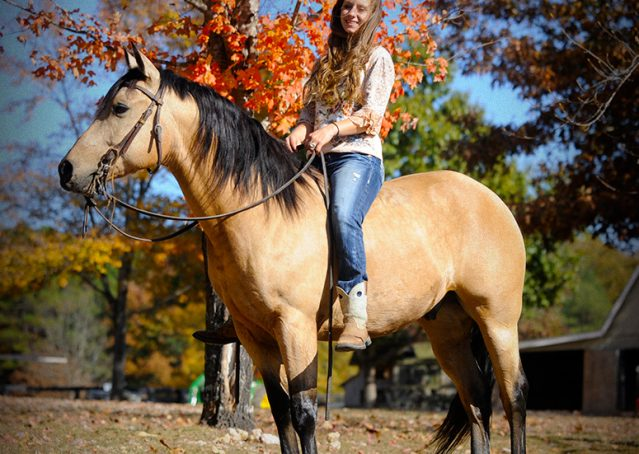 002-Hotrod-AQHA-Buckskin-Gleding-For-Sale