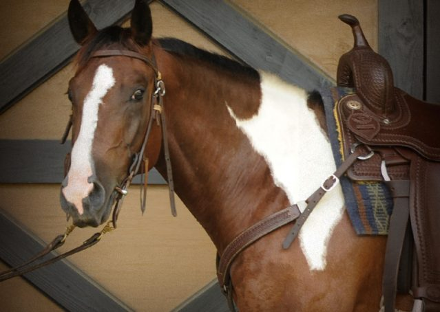 002-Lena-APHA-mare-for-sale