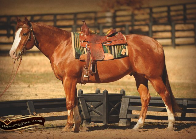 002-Zip4-AQHA-Sorrel-Gelding-For-Sale