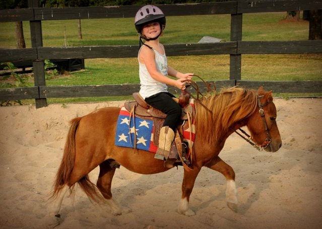 002-beginner-kids-riding-pony-for-sale-horse-of-my-dreams