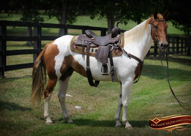 003-Amiga-APHA-Mare-For-Sale