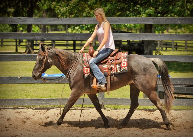 003-Blue3-AQHA-Blue-Roan-For-Sale