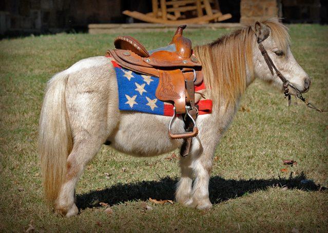003-Drew-Paint-Mini-Pony-For-Sale