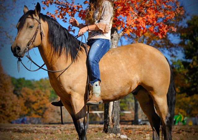 003-Hotrod-AQHA-Buckskin-Gleding-For-Sale