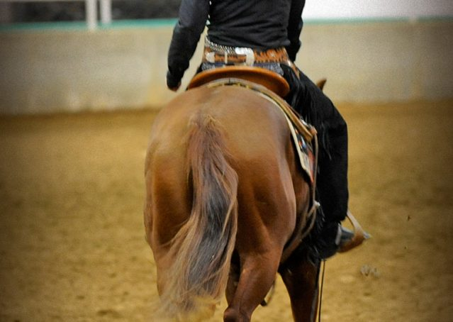003-Indie-Sorrel-AQHA-reining-horse-for-sale