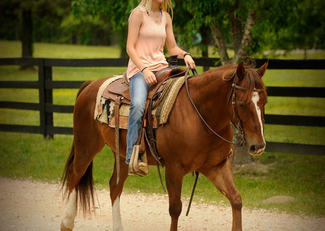 003-Jack2-Chestnut-AQHA-Gelding-For-Sale