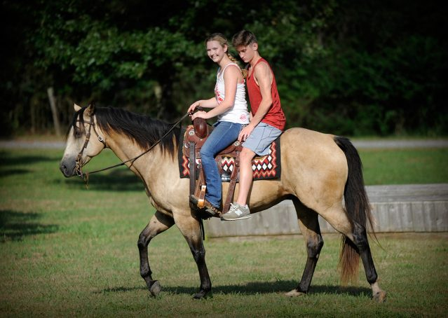 003-Leo3-Buckskin-AQHA-Gelding-For-Sale