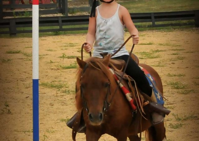 003-beginner-kids-riding-pony-for-sale-horse-of-my-dreams
