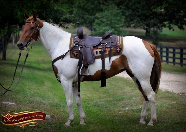 004-Amiga-APHA-Mare-For-Sale