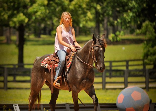 004-Blue3-AQHA-Blue-Roan-For-Sale