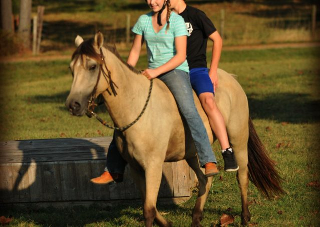 004-Buckskin-Pony-Mare-For-Sale-Jill