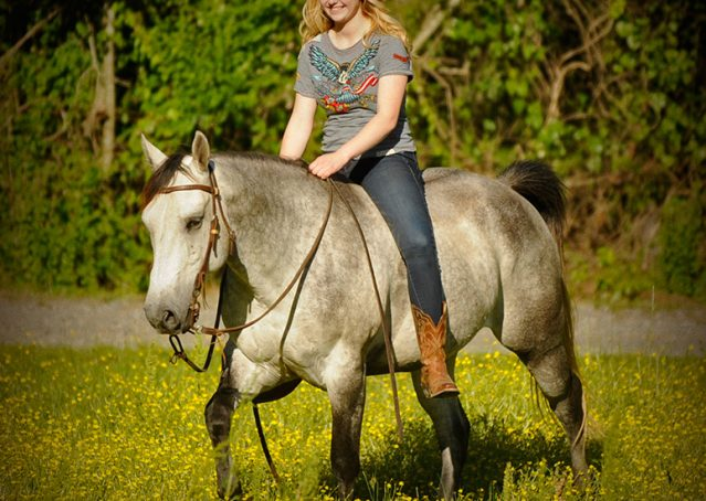 004-Casper-Grey-Quarter-Horse-Gelding-For-Sale