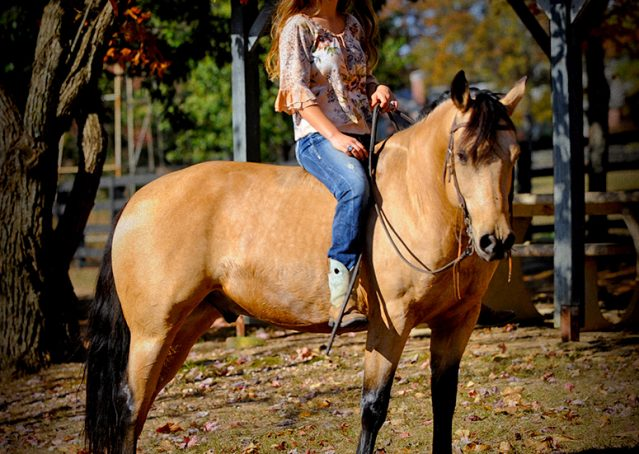 004-Hotrod-AQHA-Buckskin-Gleding-For-Sale