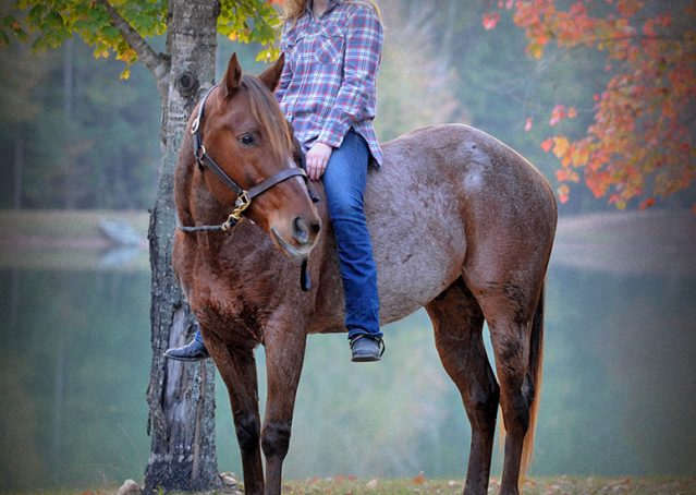 004-Jack-Frost-AQHA-Red-Roan-Gelding-For-Sale