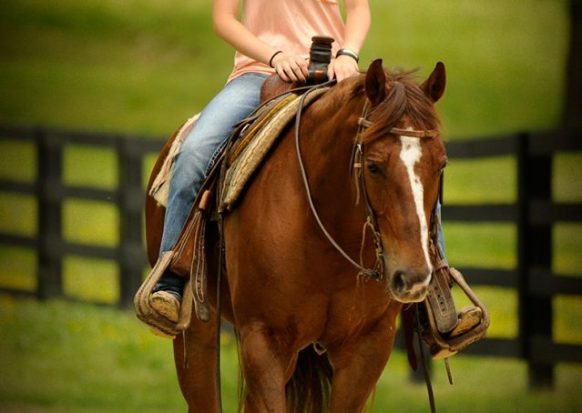 004-Jack2-Chestnut-AQHA-Gelding-For-Sale