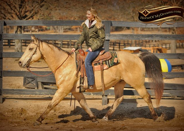 004-King-Buckskin-AQHA-Gelding-For-Sale