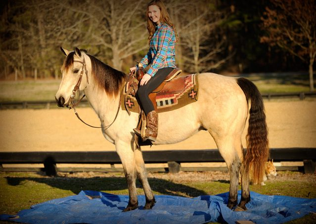 004-Kody-Buckskin-AQHA-Gelding-For-sale
