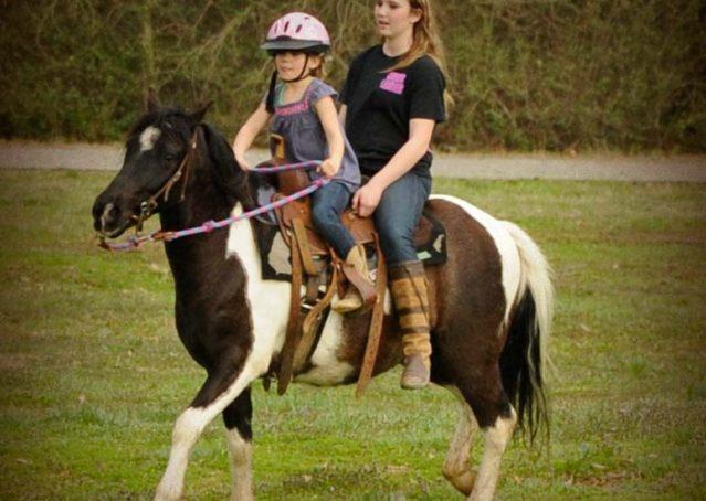 004-Rocky-paint-pony-gelding-for-sale