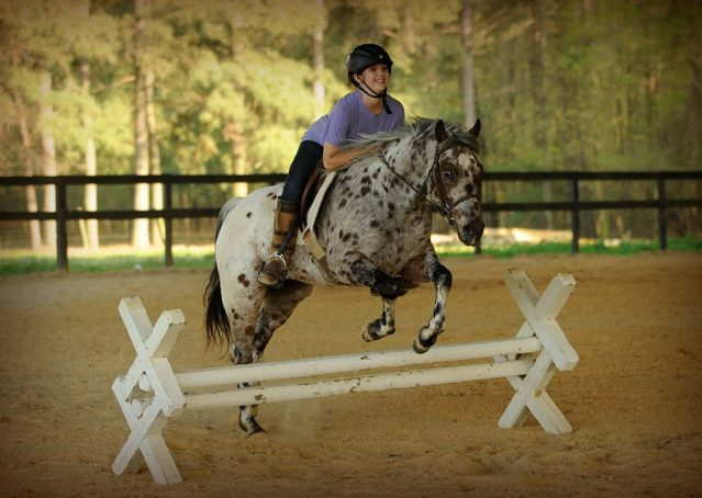 004-Shy-appaloosa-pony-for-sale