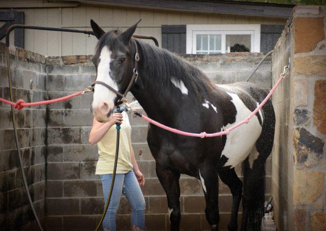 004-Titan-Black-and-white-paint-gelding