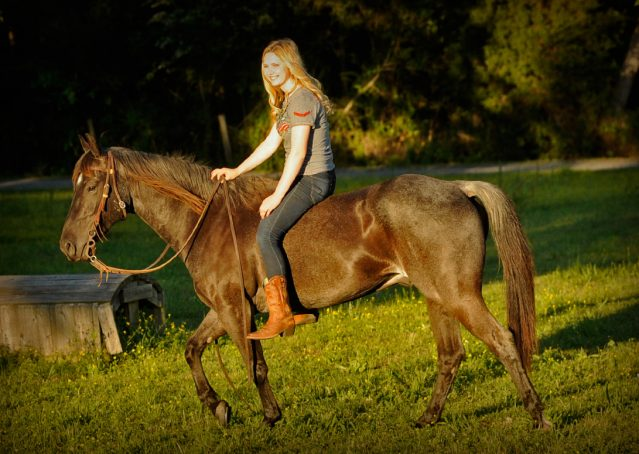 005-Blue3-AQHA-Blue-Roan-For-Sale