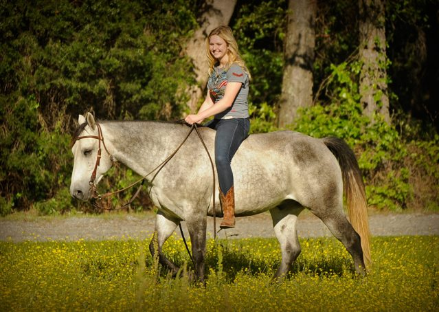 005-Casper-Grey-Quarter-Horse-Gelding-For-Sale