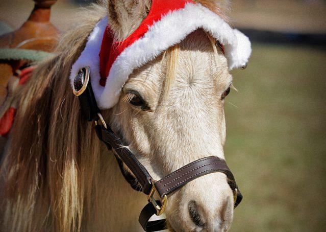 005-Drew-Paint-Mini-Pony-For-Sale