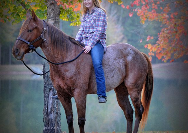 005-Jack-Frost-AQHA-Red-Roan-Gelding-For-Sale
