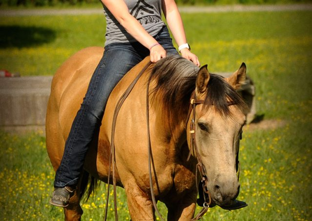 005-Jessie2-Buckskin-Gelding-For-Sale