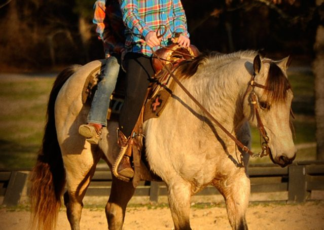 005-Kody-Buckskin-AQHA-Gelding-For-sale