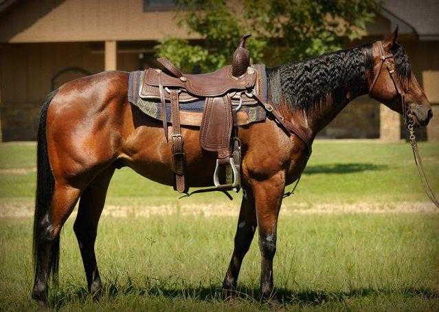 005-Nic-boomernic-aqha-gelding-for-sale