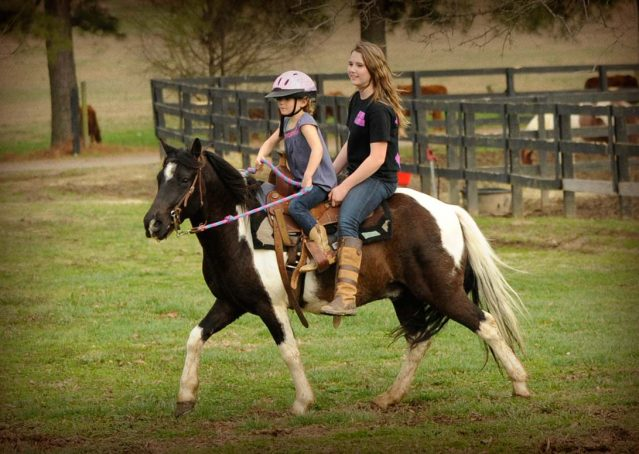 005-Rocky-paint-pony-gelding-for-sale