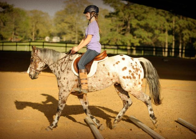005-Shy-appaloosa-pony-for-sale