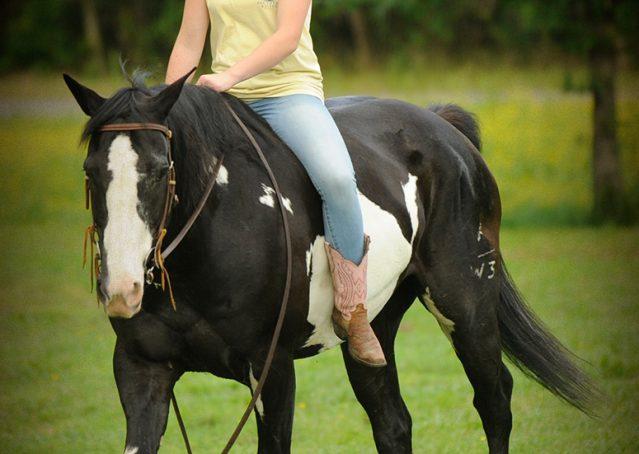 005-Titan-Black-and-white-paint-gelding