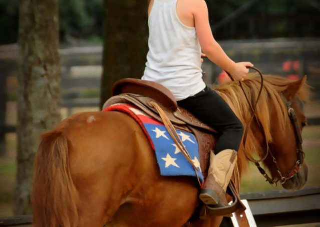 005-beginner-kids-riding-pony-for-sale-horse-of-my-dreams