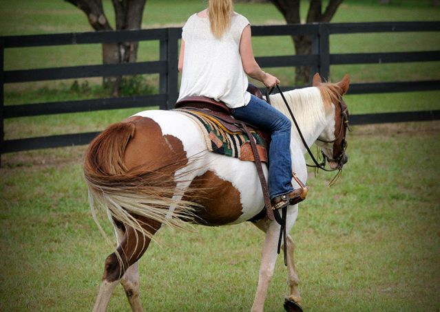 006-Amiga-APHA-Mare-For-Sale