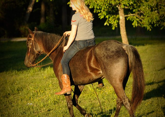 006-Blue3-AQHA-Blue-Roan-For-Sale